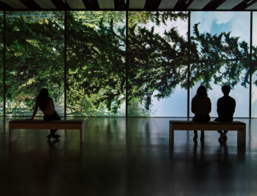 'Among the Trees' Virtual Exhibition